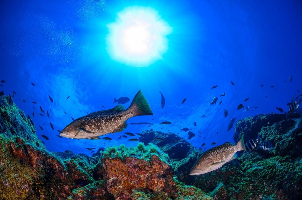 Mobilità Green: El Hierro l'isola sostenibile nell'Oceano Atlantico